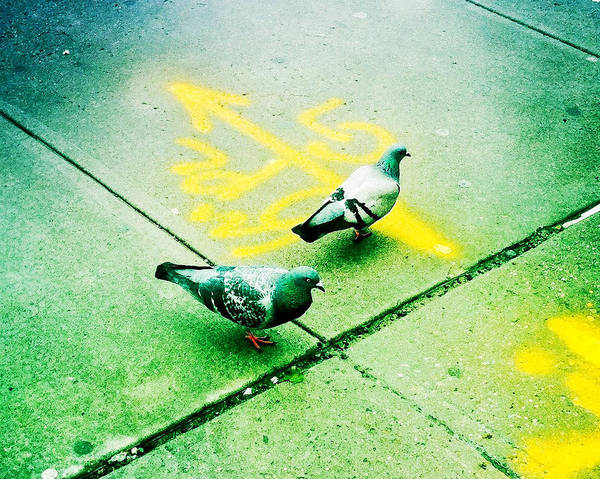 T-squared Doves Art Print