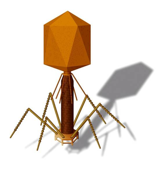 Wall Art - Photograph - T4 Bacteriophage, Artwork by Art For Science