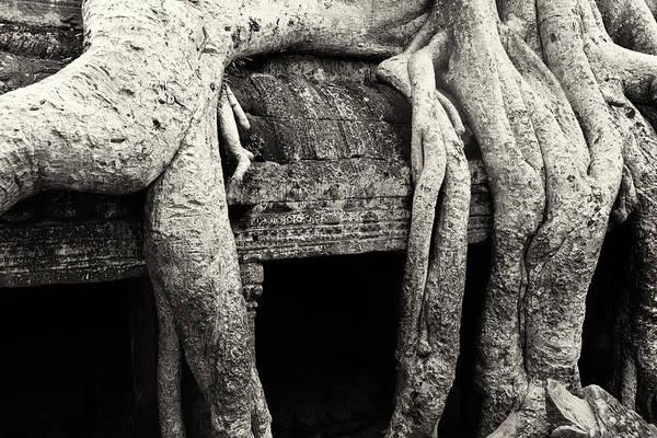 Photograph - Ta Prohm 02 by Stefan Nielsen