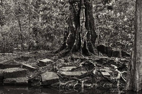 Photograph - Ta Prohm 04 by Stefan Nielsen