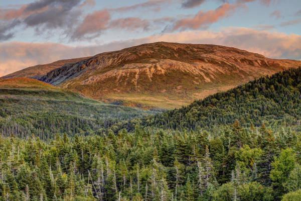 Gros Morne Photograph - Ancient Boreal Mountain And Forest by Scott Leslie