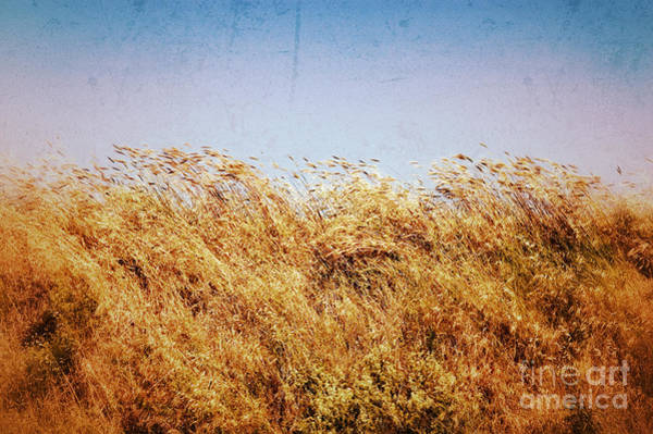 Photograph - Tall Grass In The Wind by Silvia Ganora