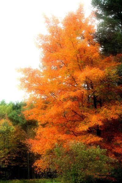 Tangerine Autumn  Art Print by Darlene Bell