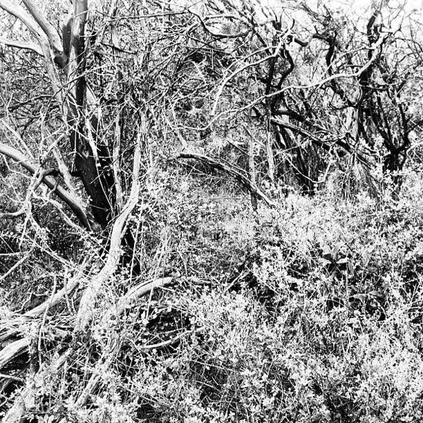 Brush Wall Art - Photograph - Tangled by Richard Spicer