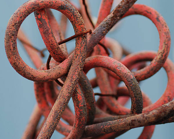 Junk Wall Art - Photograph - Tangled Up In Rust  by Susan Capuano