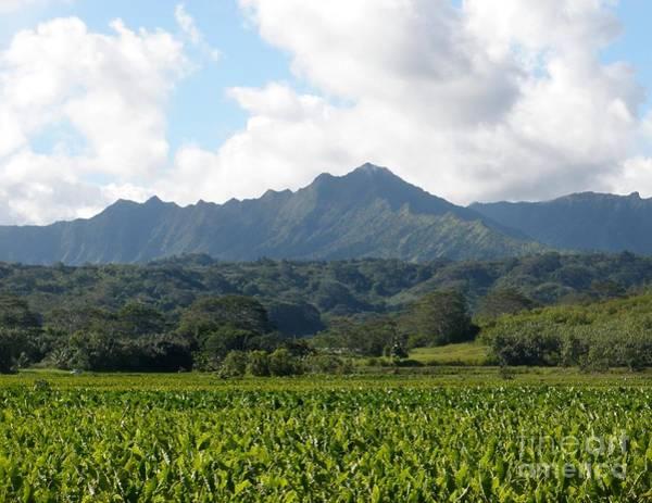 Photograph - Taro Plantation by Jeanie Watson