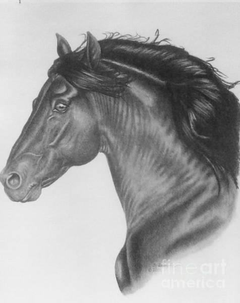 Friesian Drawing - Te Amo by Dave Alwin