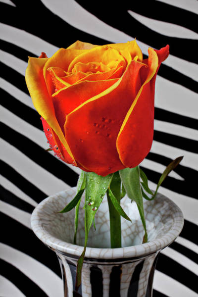 Orange Rose Photograph - Tea Rose In Striped Vase by Garry Gay
