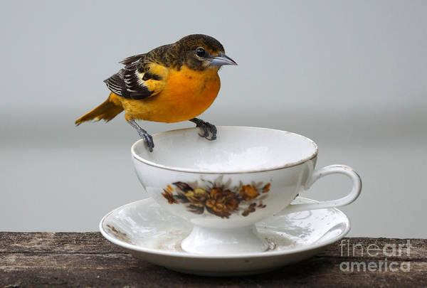 Wall Art - Photograph - Tea Time by Lori Tordsen