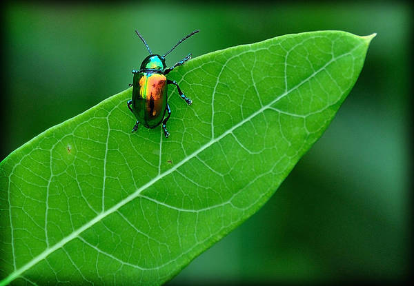 Photograph - Technicolor Beetle 1 by Mark Fuller