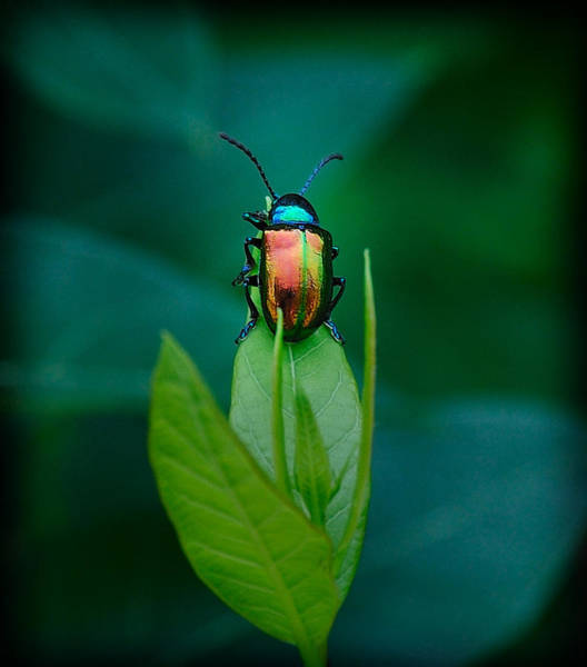 Photograph - Technicolor Beetle 2 by Mark Fuller