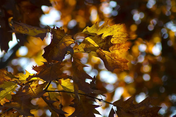 Photograph - Telephoto Fall Colors by Sven Brogren