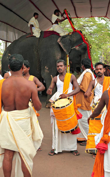 Photograph - Temple Elephant And Drummers by Paul Cowan