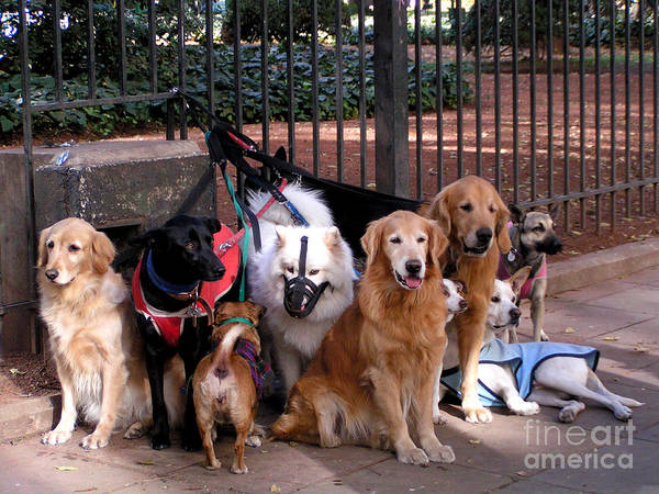 Service Dog Photograph - Ten Alpha Dogs by Alexandra Jordankova