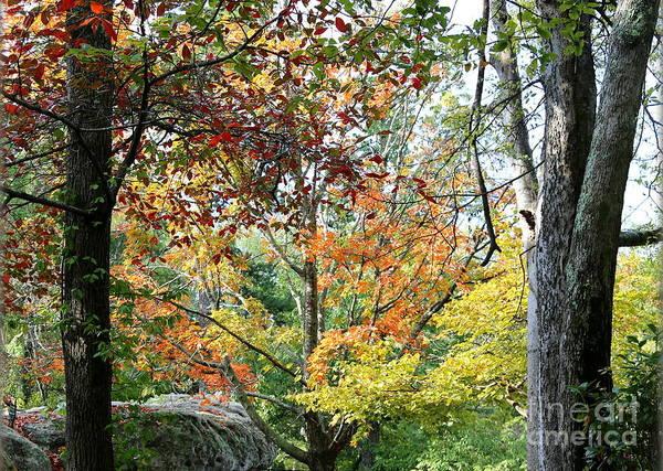 Photograph - Tennessee Autumn by Carol Groenen