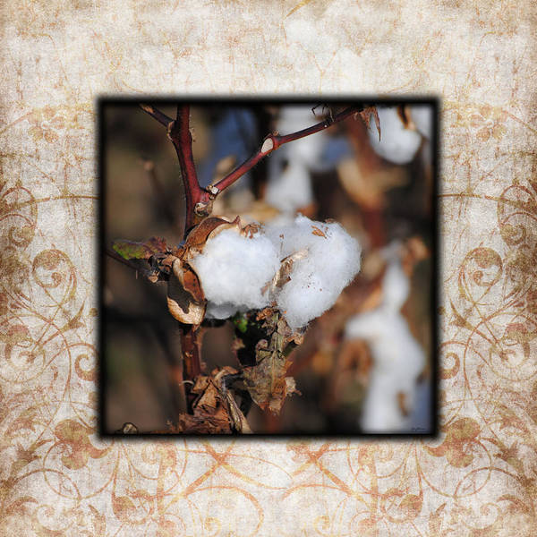 Photograph - Tennessee Cotton I Photo Square by Jai Johnson