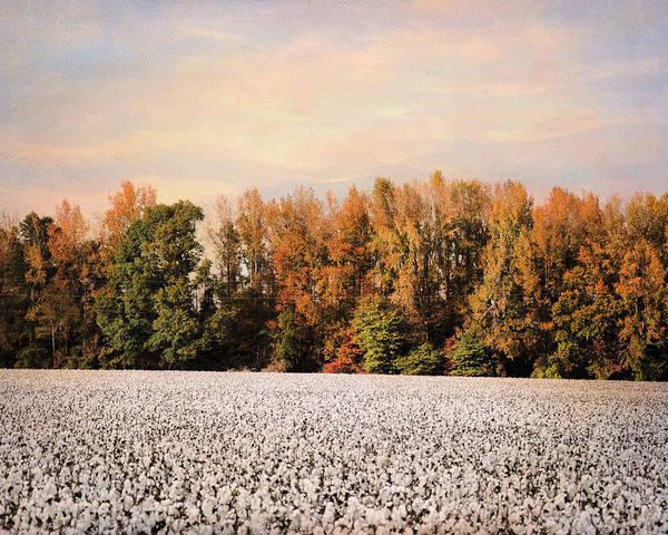 Photograph - Tennessee Cotton by Jai Johnson