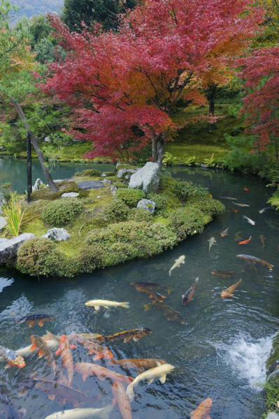 Made In Japan Wall Art - Photograph - Tenryuji Temple Is A Zen Buddhist by Rob Tilley