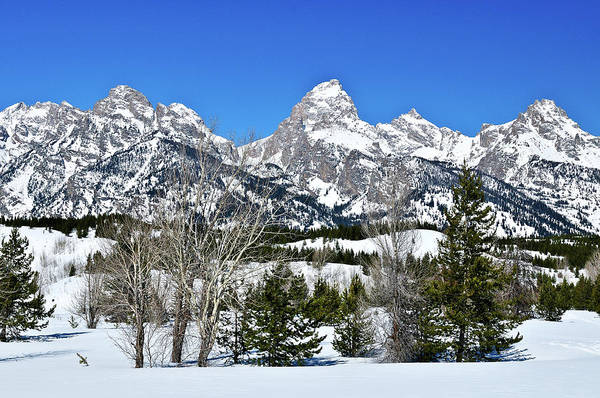 Art Print featuring the photograph Teton Winter Landscape by Greg Norrell
