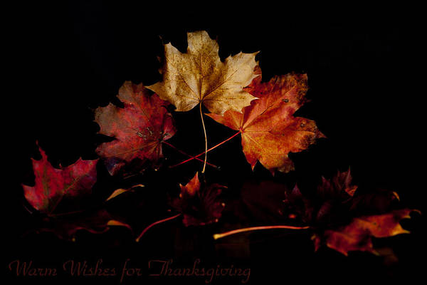 Photograph - Thanksgiving Wishes by Beverly Cash