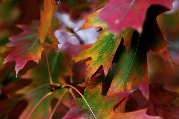Photograph - The Autumn Leaves by Lorraine Devon Wilke