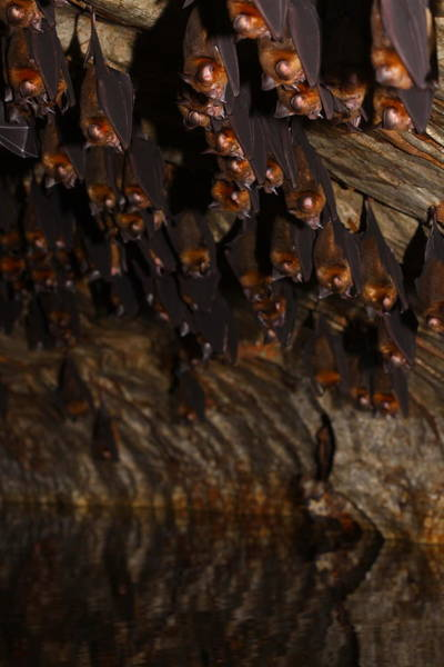 Wall Art - Photograph - The Bat Cave by Bruce J Robinson