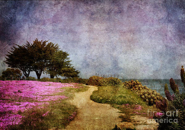 Monterey Park Photograph - The Beckoning Path by Laura Iverson