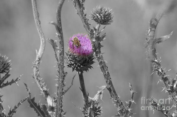 Photograph - The Bee Matters by Donna Greene