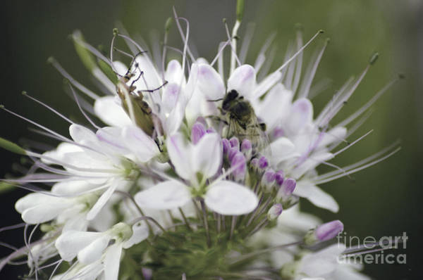 Photograph - The Beetle And The Bee by Donna Greene