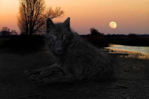 Alpha Wolf Wall Art - Photograph - The Black Lone Wolf by Joachim G Pinkawa