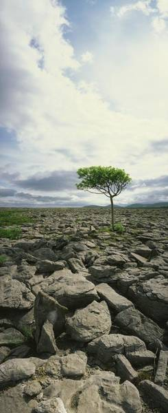 The Burren Photograph - The Burren, On Kinvara Side, Co Clare by The Irish Image Collection
