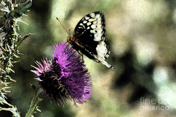 Photograph - The Butterfly II by Donna Greene
