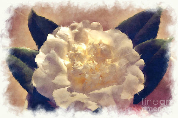 Photograph - The Camillia by Donna Bentley