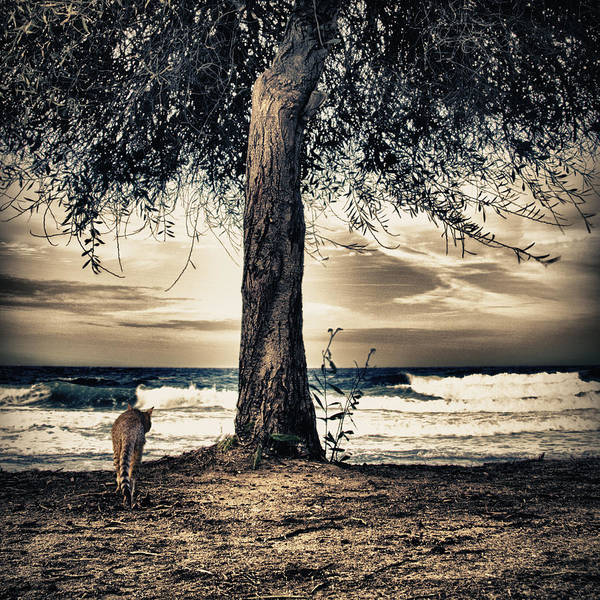 Wall Art - Photograph - The Cat And The Sea by Stelios Kleanthous