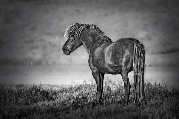 Horse Country Photograph - The Dark Goddess by Evelina Kremsdorf