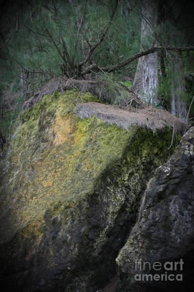 Photograph - The Deep Trees by Sharon Mau