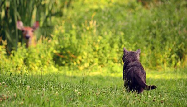 Photograph - The Deer Hunter by Lori Tambakis