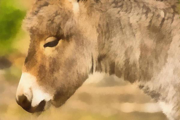 Digitalart Painting - The Donkey Portrait by Odon Czintos