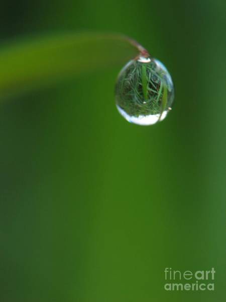 Photograph - The Drop by Odon Czintos