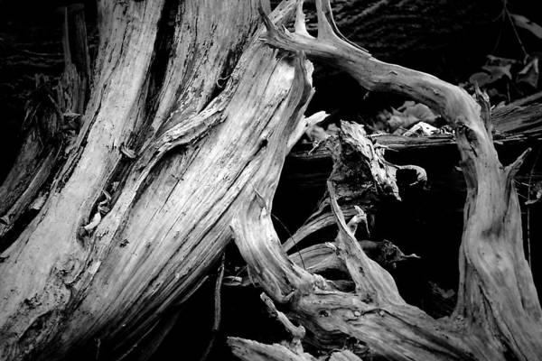 Photograph - The Fallen by Beth Akerman