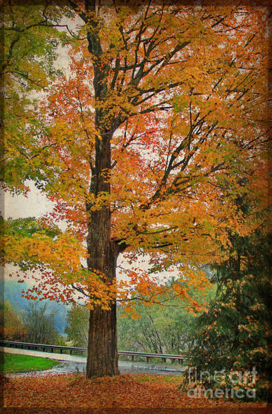 Photograph - The Fay Tree by Deborah Benoit