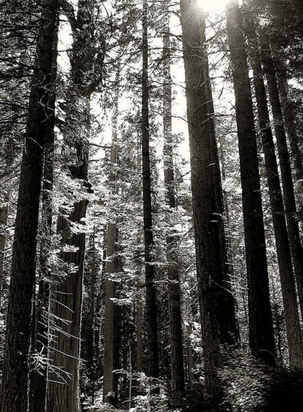 Photograph - The Forest Through The Trees by Pam  Holdsworth