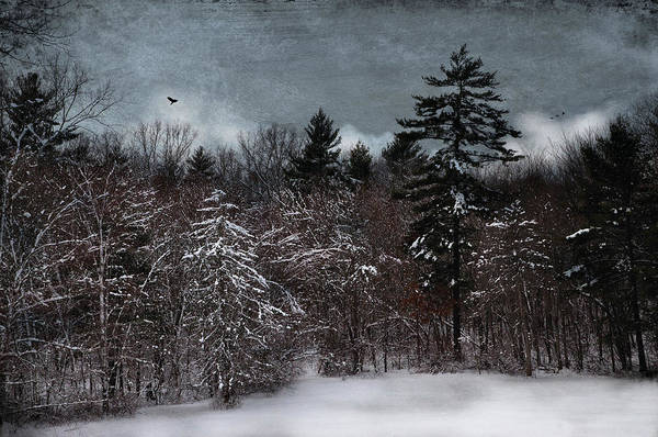 Photograph - The Frosted Forest by Robin-Lee Vieira