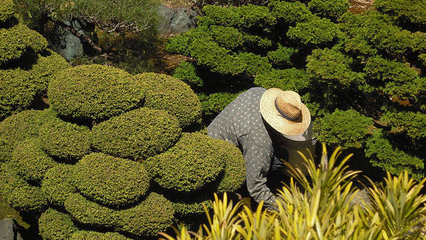 Photograph - The Gardener by Richard Reeve