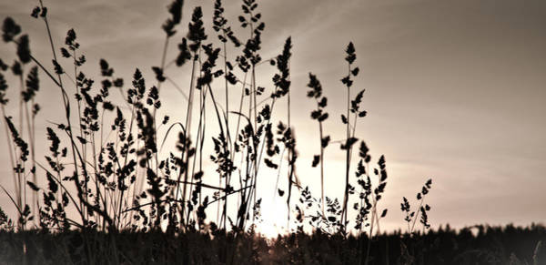 The Grass At Sunset Art Print