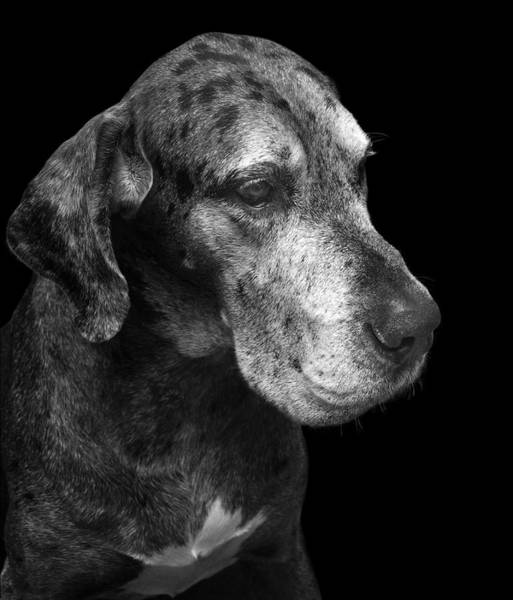 Photograph - The Great Dane by Marc Huebner