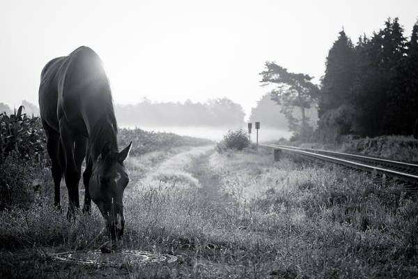 Pferd Photograph - The Great Escape In Bw by Edward Myers