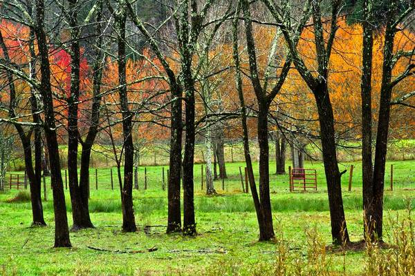 Photograph - The Grove by Debra and Dave Vanderlaan