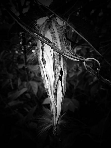 Photograph - The Hanging Pod by Beth Akerman