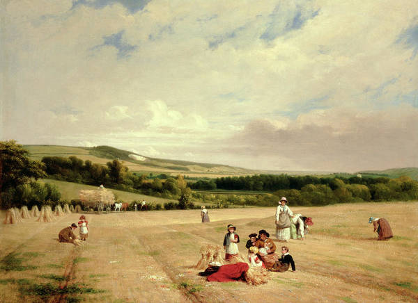 Harvesting Wall Art - Painting - The Harvest Field by William Frederick Witherington